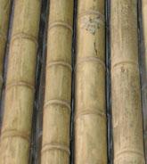 Bambus Lexikon Als Baumaterial In Sudamerika