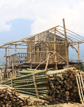 Bamboo: An Ancient Solution to Modern Problems.