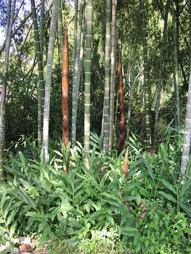 vernichtung regenwald pro tag